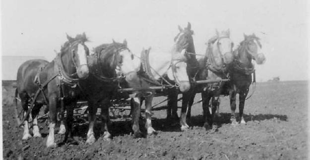 Gillespie Family horse team circa 1920's Durban, Manitoba
